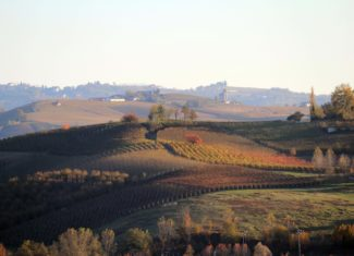 Exploring the Langhe wine region in Piemonte