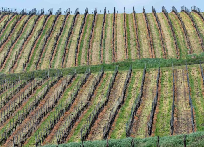 A wine tasting tour in Oltrepò Pavese