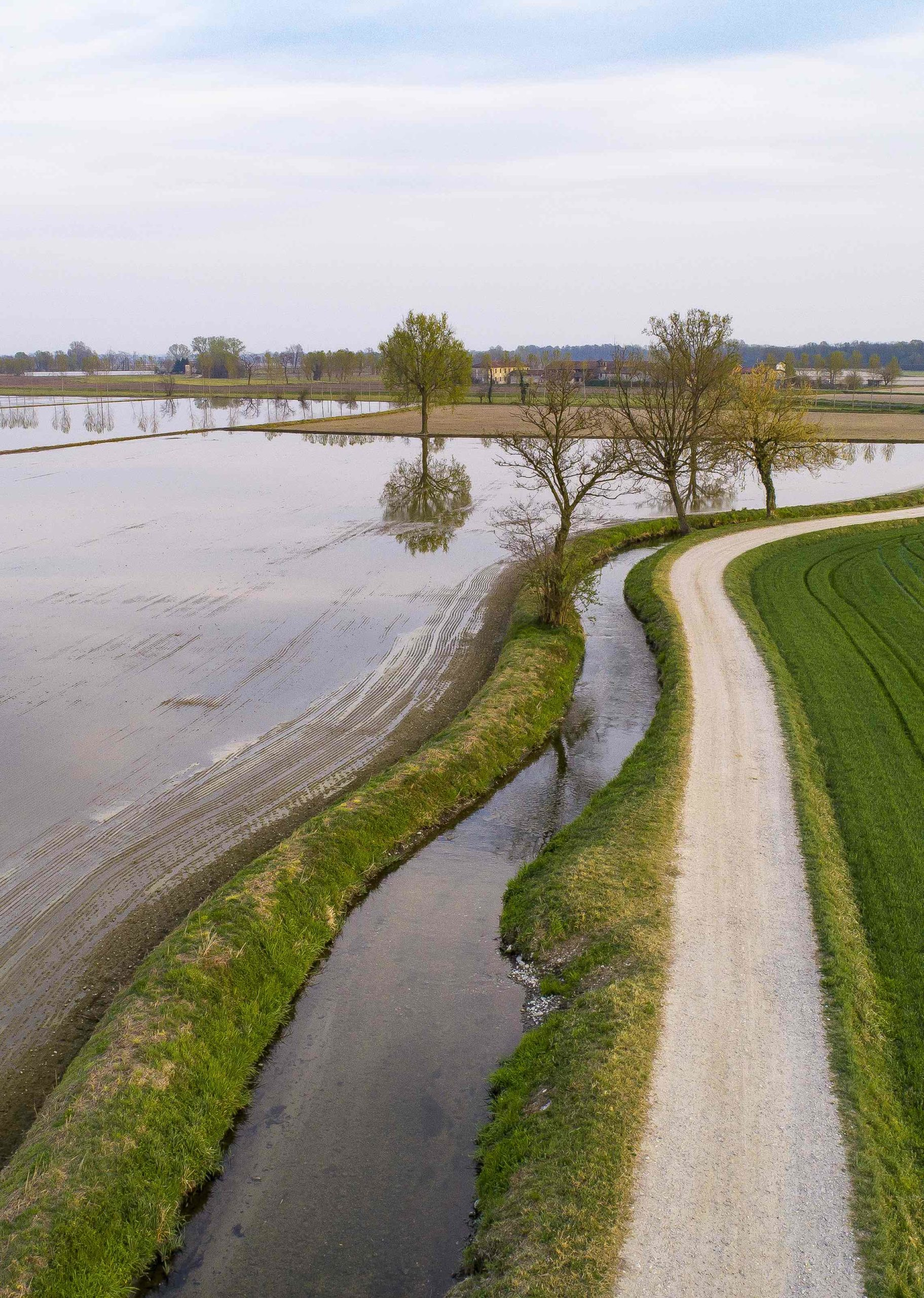Flooded fields for rice cultivation in Lomellina, Italy. Panoramic aerial view. Typical countryside landscape of northern Italy with dirt roads, fields and ancient farms.