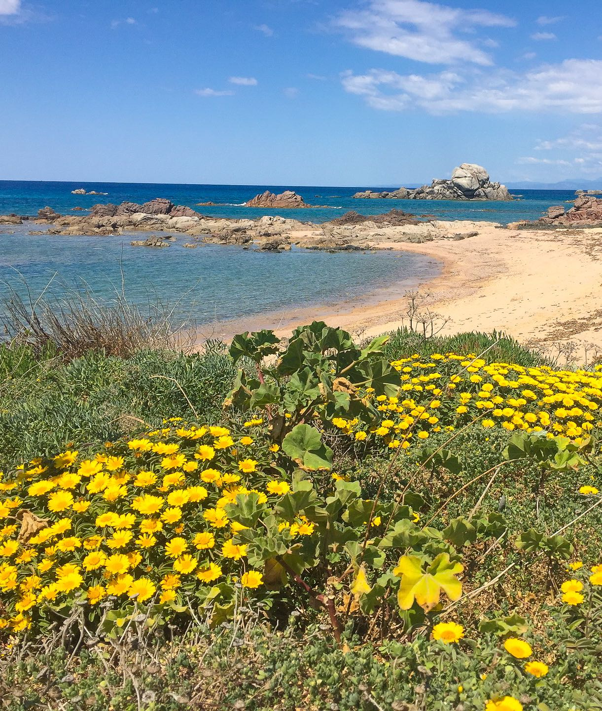 View of a beach with yellow flowers in Sardinia