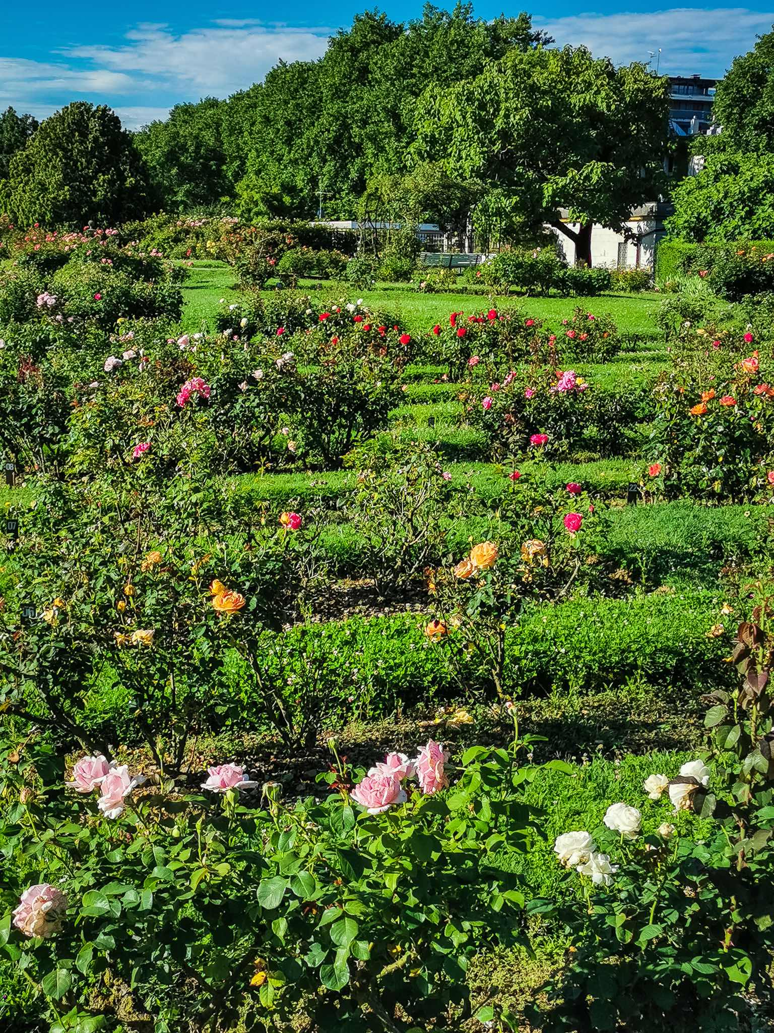 The beautiful rose garden at the Royal Villa in Monza