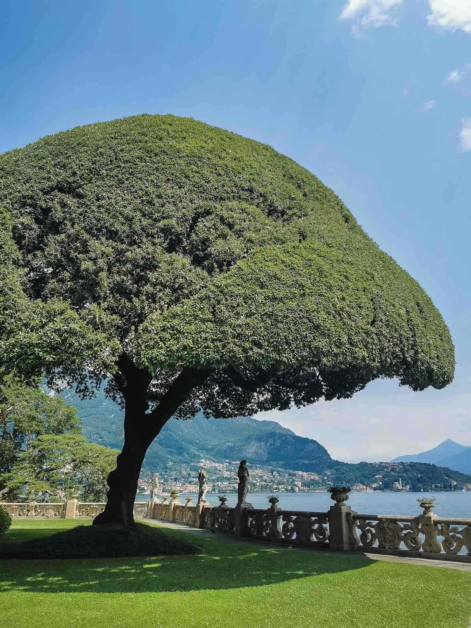 The beautiful holm oak of Villa del Balbianello, shaped like an umbrella