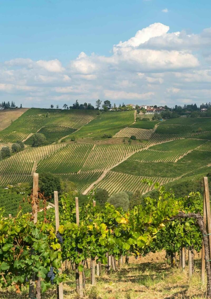 Hills covered in vineyards in Oltrepò Pavese, one of Italy's top wine districts